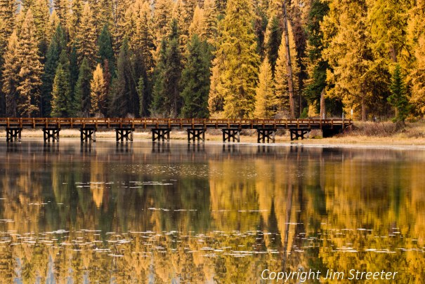 The glow of the western larch (Larix occidentalis) reflects in the Clearwater river in Seeley Lake, Montana.