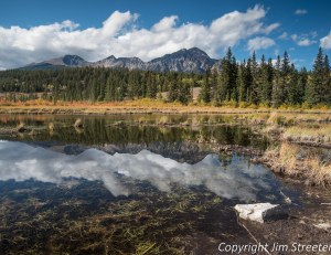 One of several ponds along Patricia Lake road in Jasper reflects golden foliage and clouds after a fall rainstorm. The Jasper townsite in located in Jasper National Park in western Alberta, Canada.