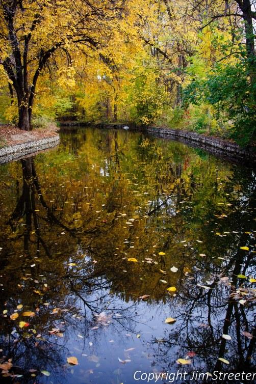 Foliage glows golden in the fall along the Boise River in Julian Davis park in Boise, Idaho