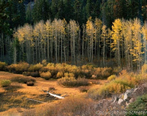 Early morning light captures the golden aspens along Highway 50 near Lake Tahoe in California.