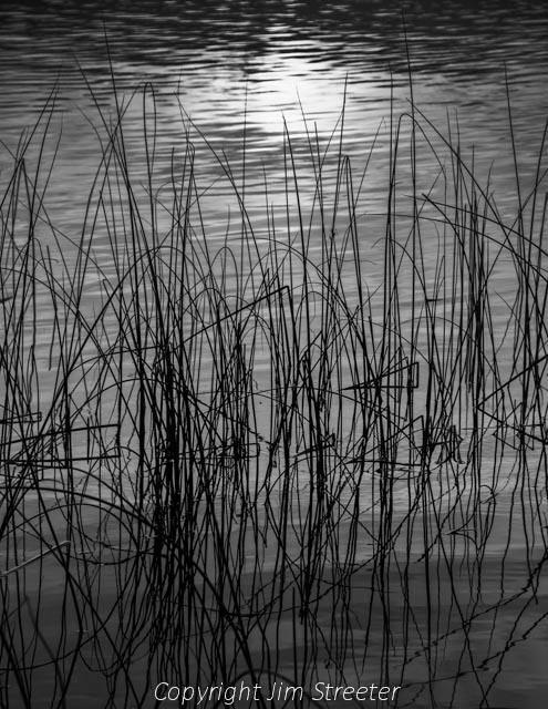 The final rays of the setting sun glint off the water, silhouetting the reeds at water's edge at Lake Mary Ronan in western Montana