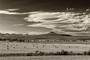 Rolls of baled hay sit waiting to be gathered at the end of summer near Choteau, Montana.