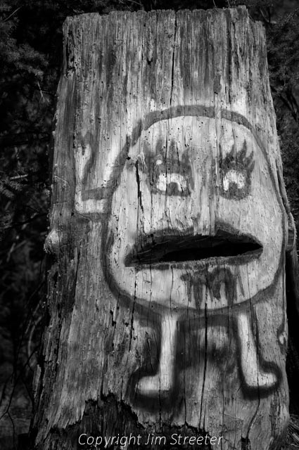 Face painted on a tree stump in the woods around Placid Lake in the Seeley-Swan valley of western Montana.