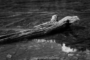 A log lies partially submerged in Glacier Lake in the Mission Mountains of western Montana.