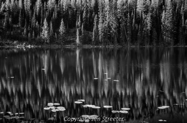 Leaves scatter across the surface of Colt Lake while golden western larch (Larix occidentalis) shimmer in the sunlight on the far shore on a autumn afternoon in the Mission mountains above the Seeley-Swan valley of western Montana.