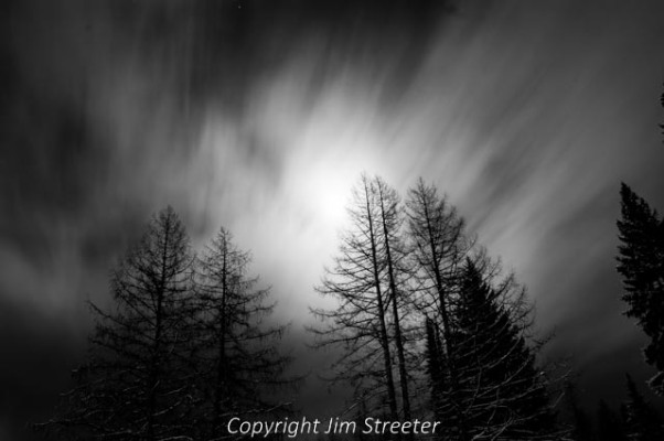 Western larch (Larix occidentalis) are silhouetted under a December moon near Essex, Montana, just outside of Glacier National Park.