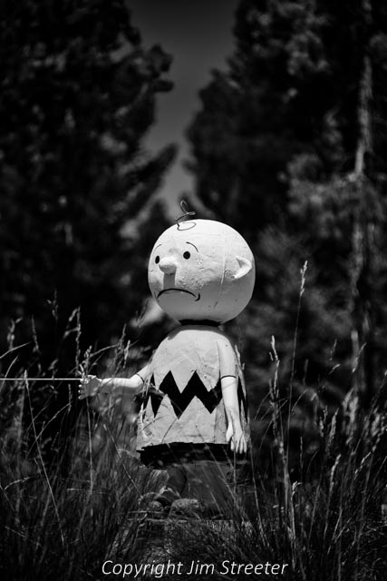 Peanuts' Charlie Brown, carved out of a tree stump, sits along the Double Arrow Road in Seeley Lake in western Montana. Charlie Brown is one of several characters carved out of tree stumps by the homeowner and sitting by the roadside