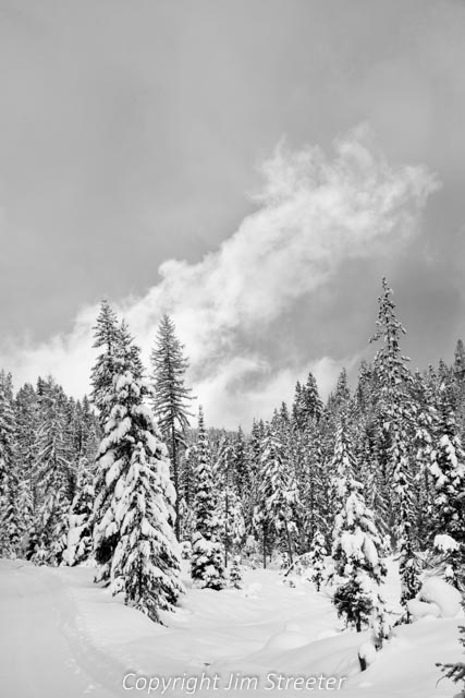 Early winter snow blankets the forest on the west fork of the Clearwater north of Seeley Lake in western Montana.