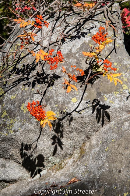 The red and yellow leaves of early fall cast shadows on the rocks along the trail to Coquina lake high above the Bitterroot valley of western Montana. The lake is located on the Montana side of the Bitterroot divide in the Bitterroot-Selway wilderness.