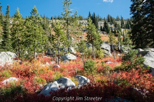 Ground foliage is turning a brilliant red along the trail to Coquina lake high above the Bitterroot valley of western Montana. The lake is located on the Montana side of the Bitterroot divide in the Bitterroot-Selway wilderness.